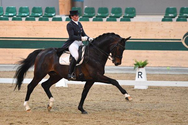data/inhalt/events/2017/17081_CDN-A_Sichtung/horsesportsphoto_freitag_17081/MagnaRacino2017_Sichtung_FR_PrunthallerUlrike_BartlgutsQuebec_Bw07_kl.jpg