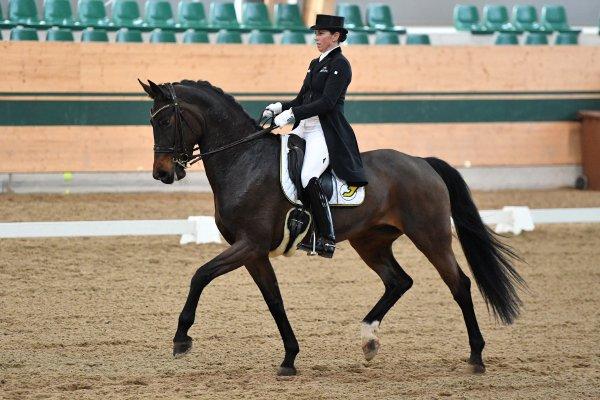 data/inhalt/events/2017/17081_CDN-A_Sichtung/horsesportsphoto_sonntag_17081/MagnaRacino2017_Sichtung_SO_WeinbauerBelinda_Ferrero Kusschen MJ_Bw25_kl.jpg