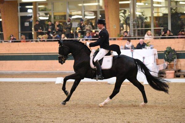 data/inhalt/events/2018/18185_CDN-A/horsesportsphoto_freitag_18185/MR2018_Feb_Dressur_Fr_Lehfellner Stefan_kl.jpg