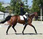 PartmannJosef Claudius Bew38 c horsesportsphoto.eu.JPG