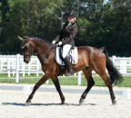 SykoraMarion Carmino Bew36-1 c horsesportsphoto.eu.JPG